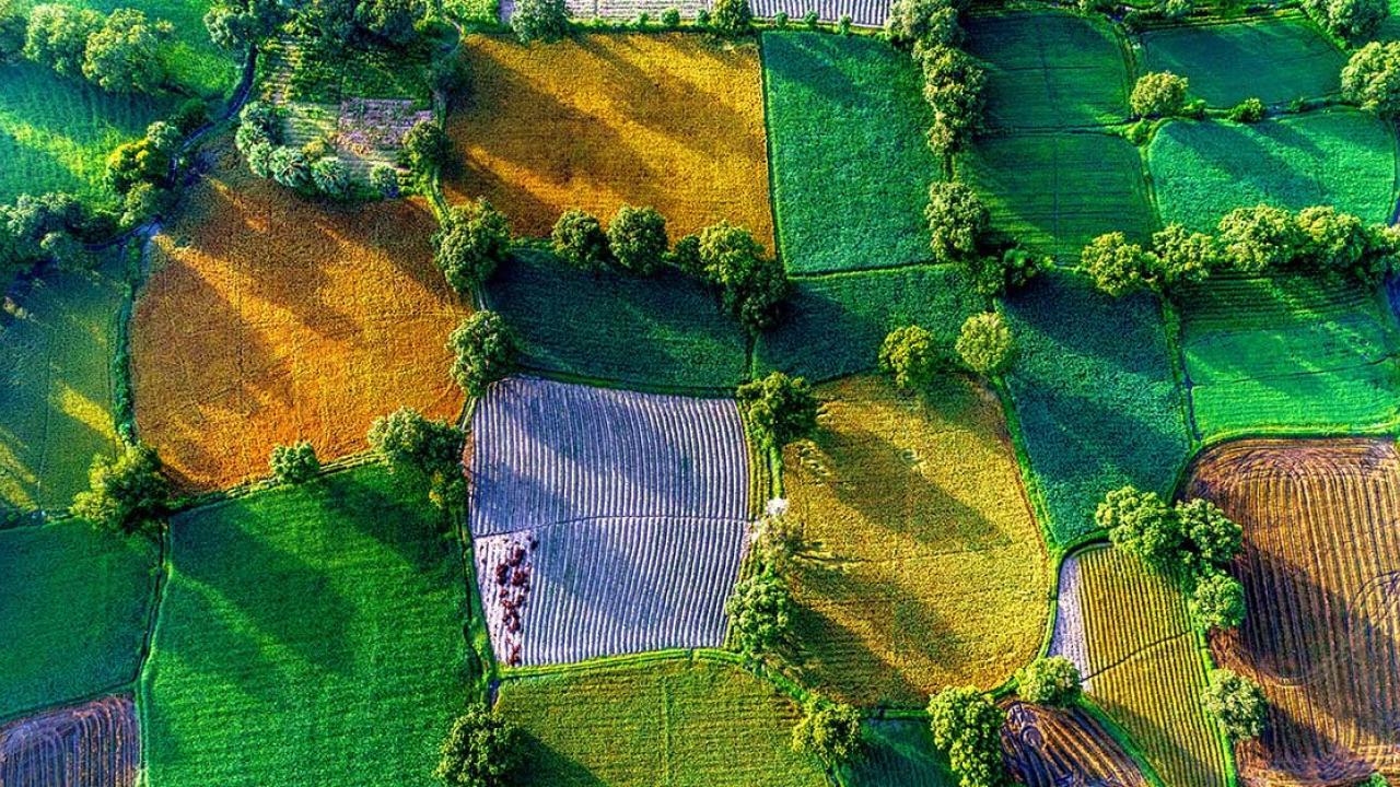 REGIONE VENETO-PSR 2014/2020. Intervento 2.1.1. Finanziamento a fondo perduto pari al 100% per l'uso da parte delle aziende agricole dei servizi di consulenza.